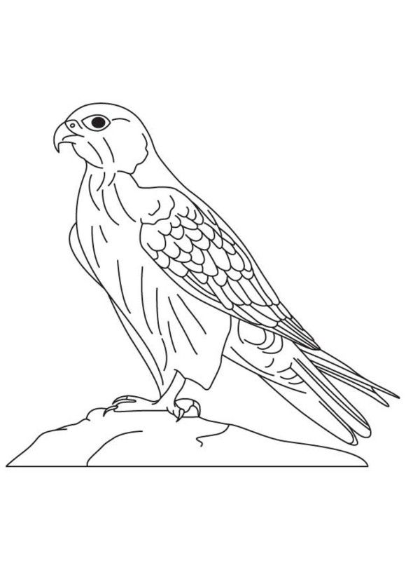 Animal Falcon Bird Coloring Pages Ways To Draw Birds