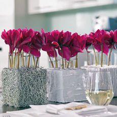 edle dekorationen mit alpenveilchen bringen ihr zuhause auch im winter zum bl hen blumenladen. Black Bedroom Furniture Sets. Home Design Ideas