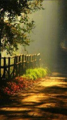 ~Autumn trail~
