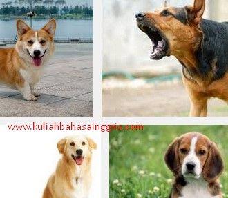 Definisi + Contoh Report Text About Dog Beserta Terjemahannya Terbaru - http://www.kuliahbahasainggris.com/definisi-contoh-report-text-about-dog-beserta-terjemahannya-terbaru/