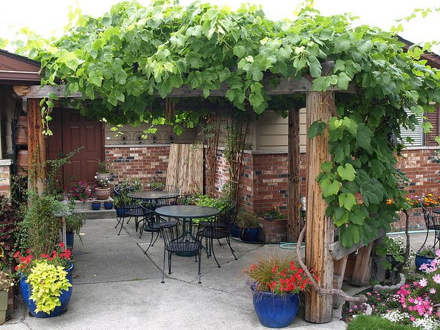 Pergola With Grapes With Images Pergola Garden Design Wooden
