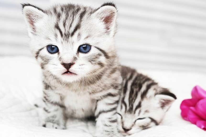 Pin Auf Katze