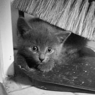 Community Post: 50 Photos Of Kittens Because Why Not?
