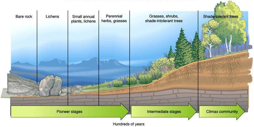 Worksheet Ecological Succession Worksheet 1000 images about ecological succesion on pinterest succession awesome and photos