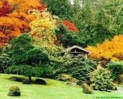 como-escolher-e-plantar-arvores-no-jardim-4