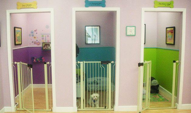 12 Pet Pampering Procedures Dog Rooms Animal Room Dog Houses