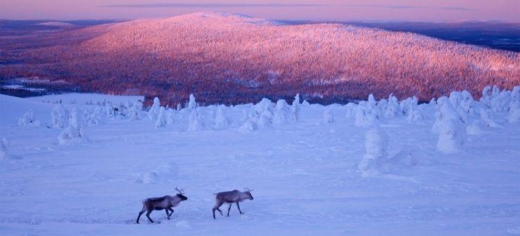 Viaje Laponia Fin de Año Esquí y Trineo con Renos