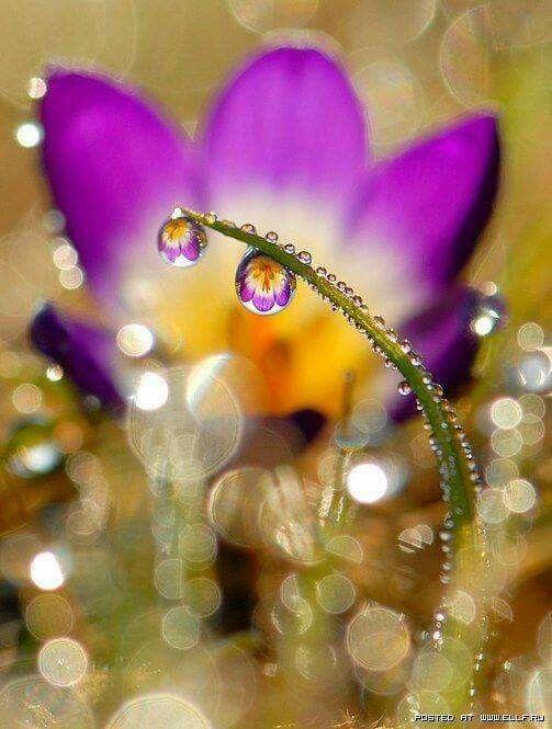 Gotas de agua en la naturaleza