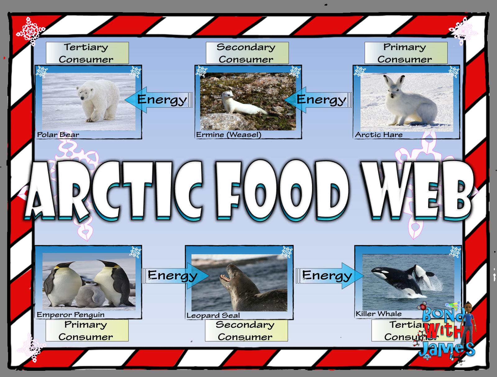 Food Chain and Food Web Arctic Card Sort Food webs