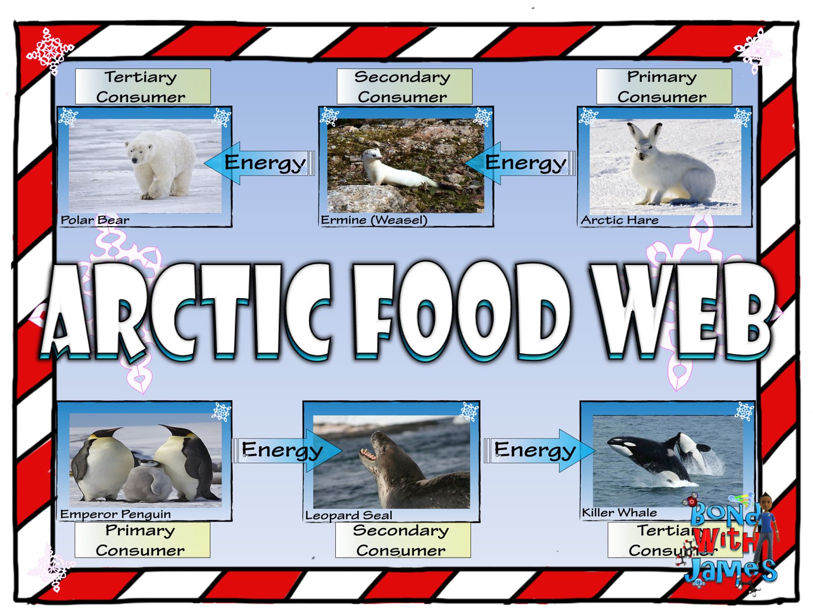 Food Chain And Food Web Arctic Card Sort
