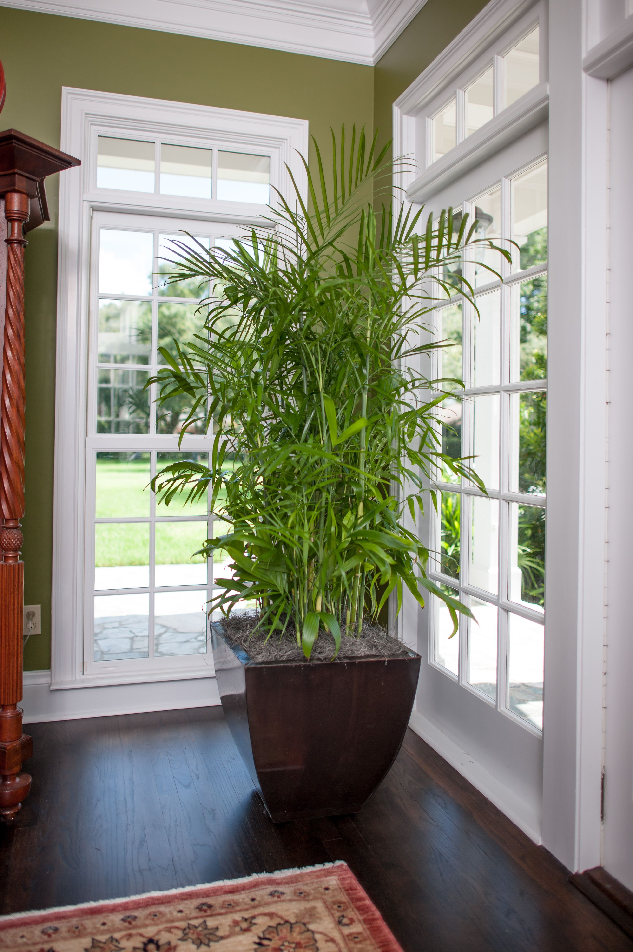15 Air Purifying Plants You Need In Your Home Best air