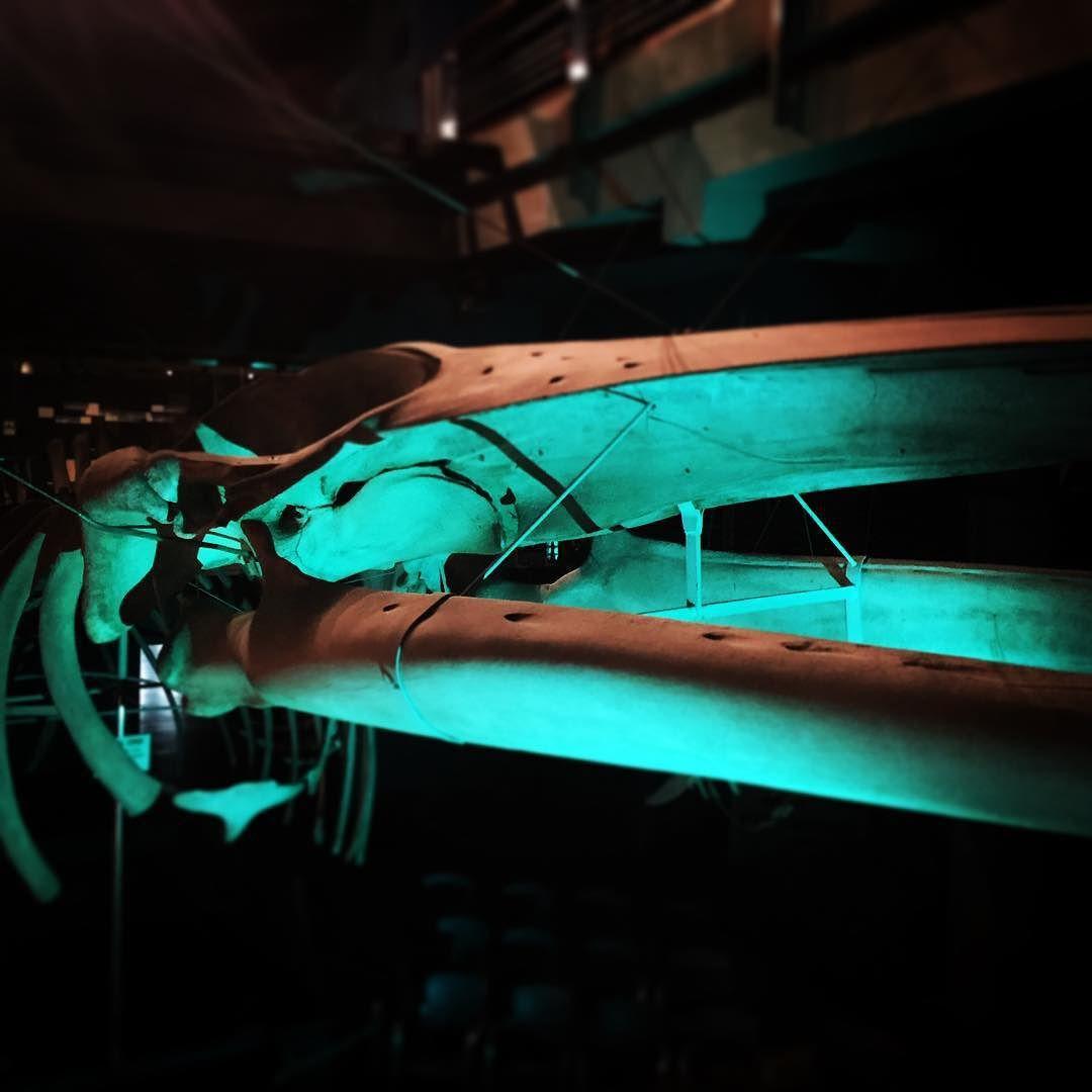 #ballena #museo #santander #surada #poesia #wow