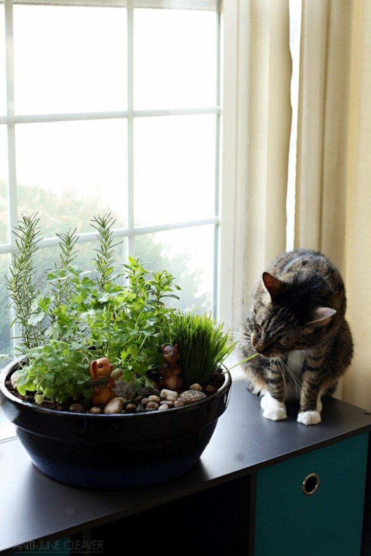 How To Make A Diy Indoor Cat Garden The Anti June Cleaver Indoor Cat Garden Cat Garden Cat Plants