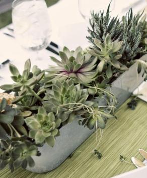 Pin By Fer Ferrer On Crassas Co Succulent Centerpieces Succulents Dining Table Centerpiece