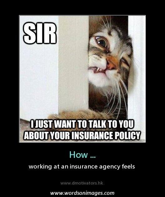 Cat Sales Humor Insurance Insurance Meme Insurance Humor Insurance Agency