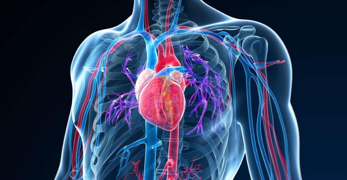How do you care for your internal organs | iHeart blog | Vinyasa ...