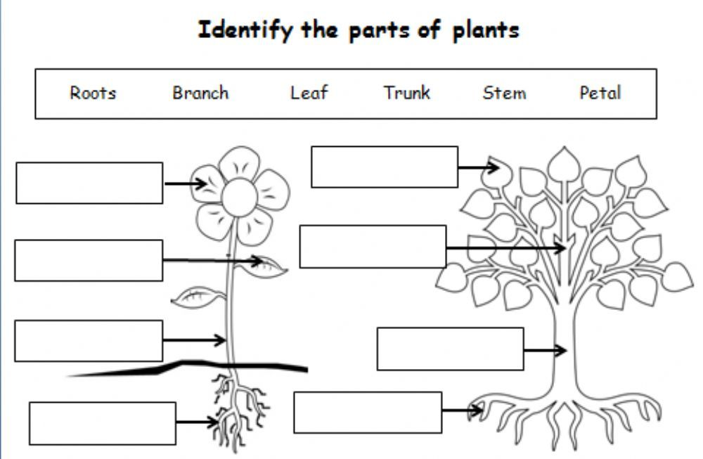 Parts Of The Plant Interactive Worksheet Plants Worksheets Parts Of A Plant Plant Lessons