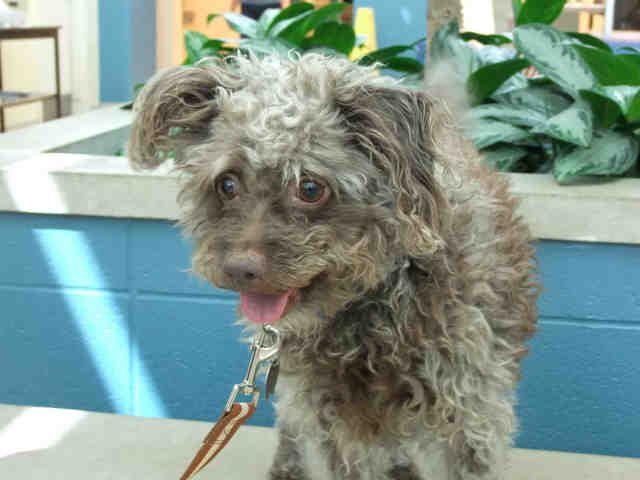 St Louis Pet Adoption Pet Adoption Humane Society Save A Dog