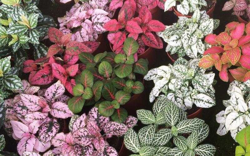 Plantas para mini jardines de interior JARDINES EN LATA Jardines - plantas para jardin
