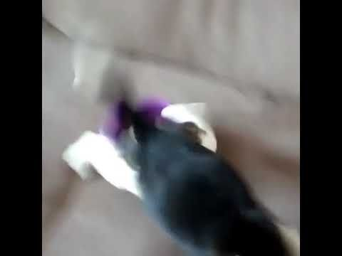 Puppy Wakes Up From Sleep After Smelling Food Youtube Sleeping