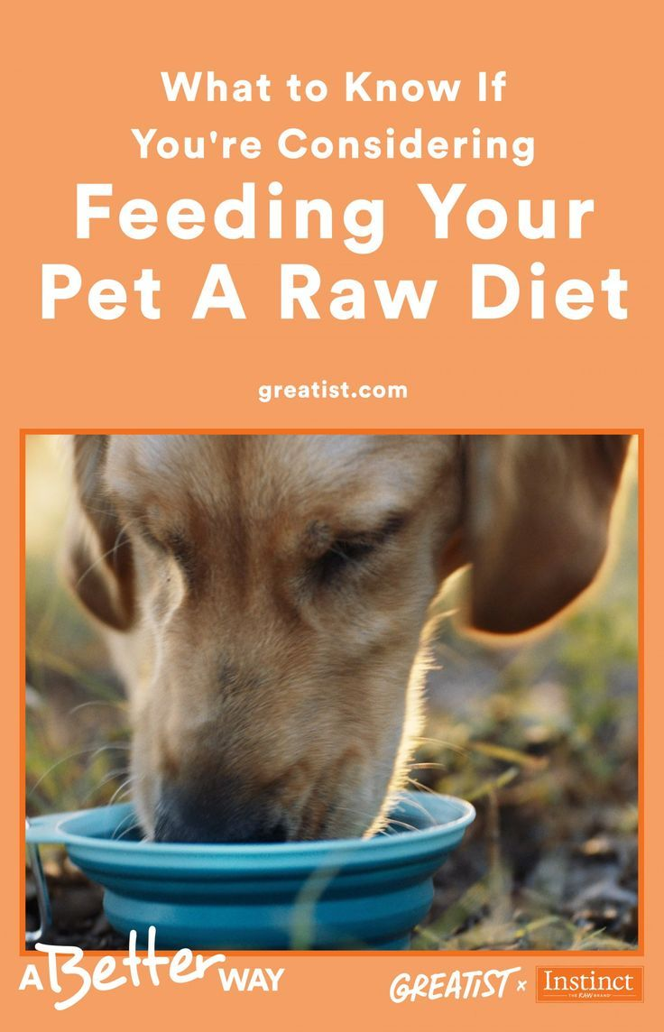 Why I Put My Pet on a Raw Diet Raw diet, Raw feeding for