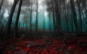 Bildergebnis Fur Wald Nebel Wallpaper Hd Hintergrundbilder Hd