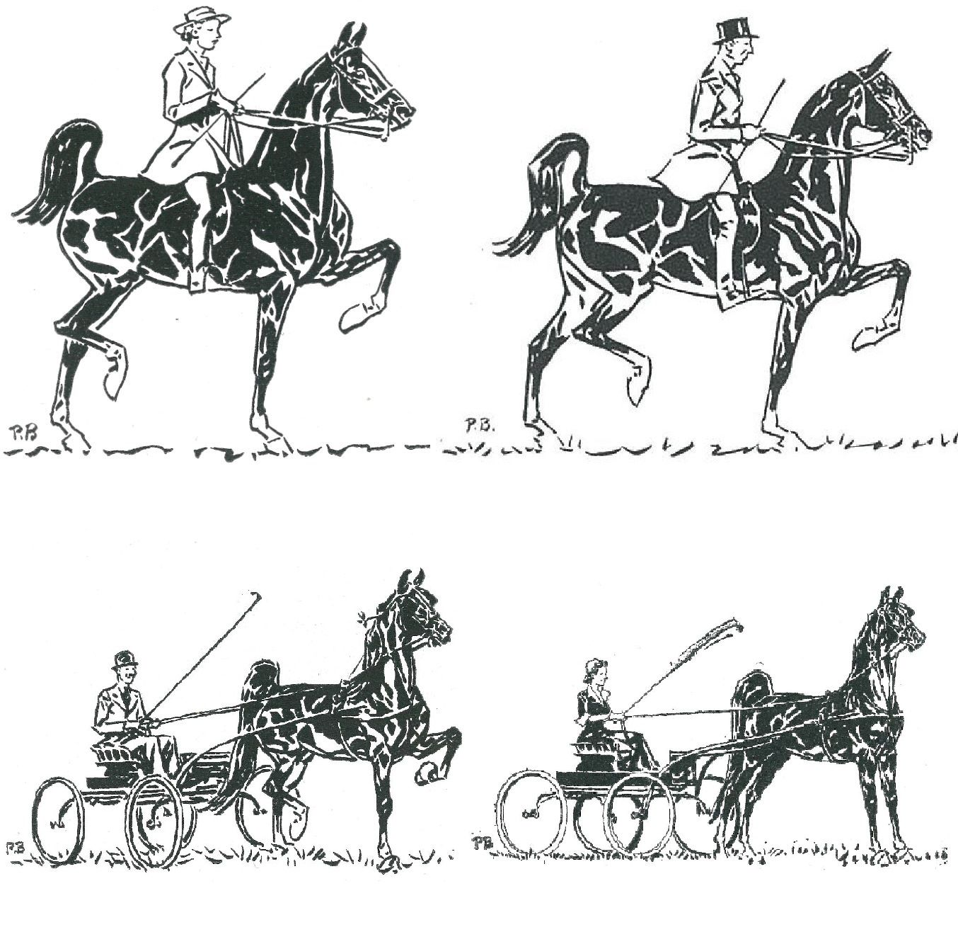 Saddlebreds Illustrated By Paul Brown Pennsylvania