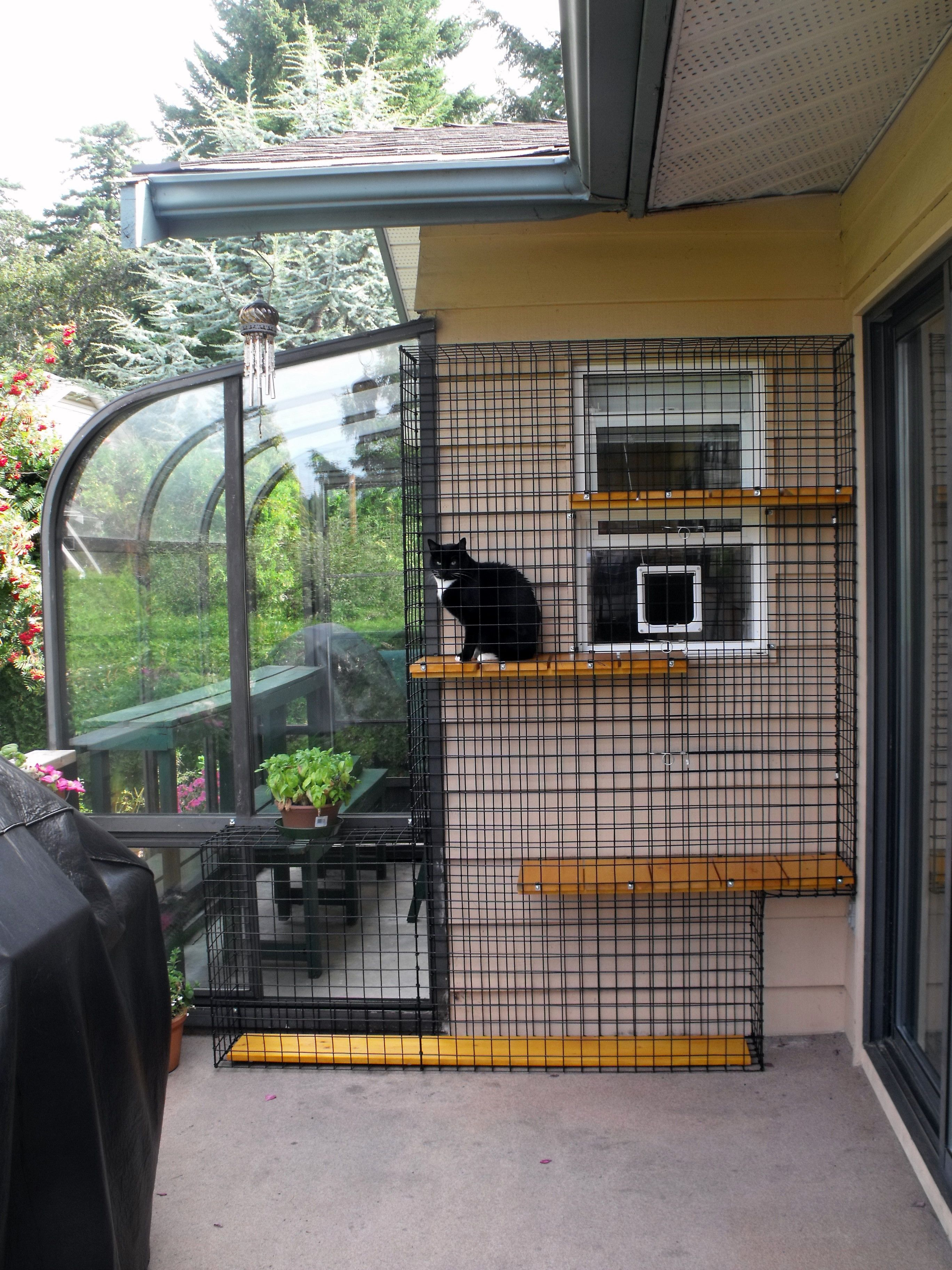 Outdoor cat enclosure with greenhouse Beautiful World