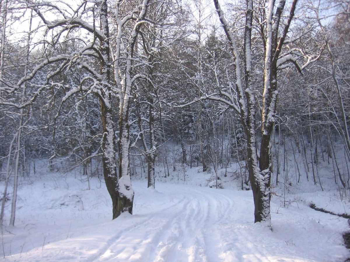 Free Images tree, snow, white, weather, covered, frozen