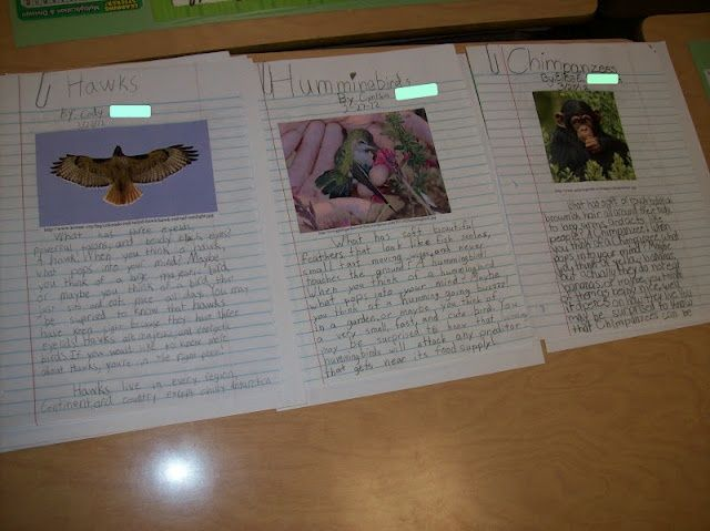 4th Grade Research Papers Writing In The Classroom Pinterest