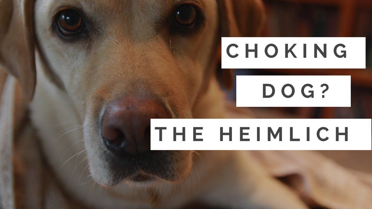 Choking Dog How To Do The Heimlich Medication For Dogs Dogs