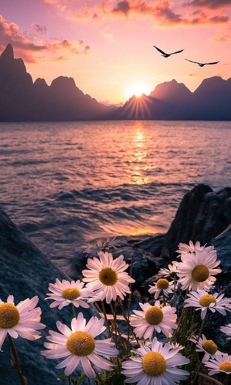 jura #beautifulflowerswallpapers jura #wallpaperbackgrounds jura #beautifulflowe
