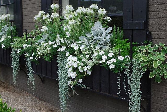 Currently Coveting Window Boxes With Images Moon Garden