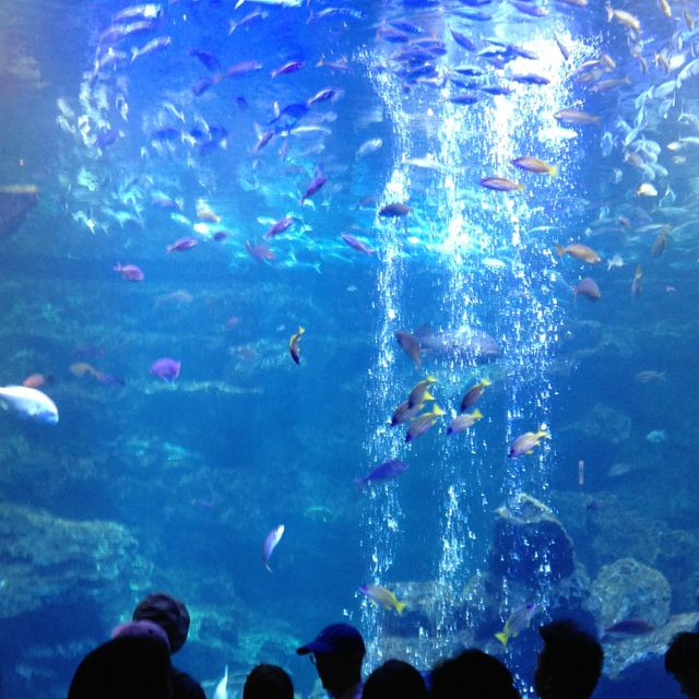 Under the sea in Kyoto