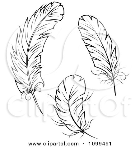 Tattoo Designs Feather Three Clipart Three Black And White Feathers Royalty Free Vector Feather Tattoos Feather Sketch Free Vector Illustration