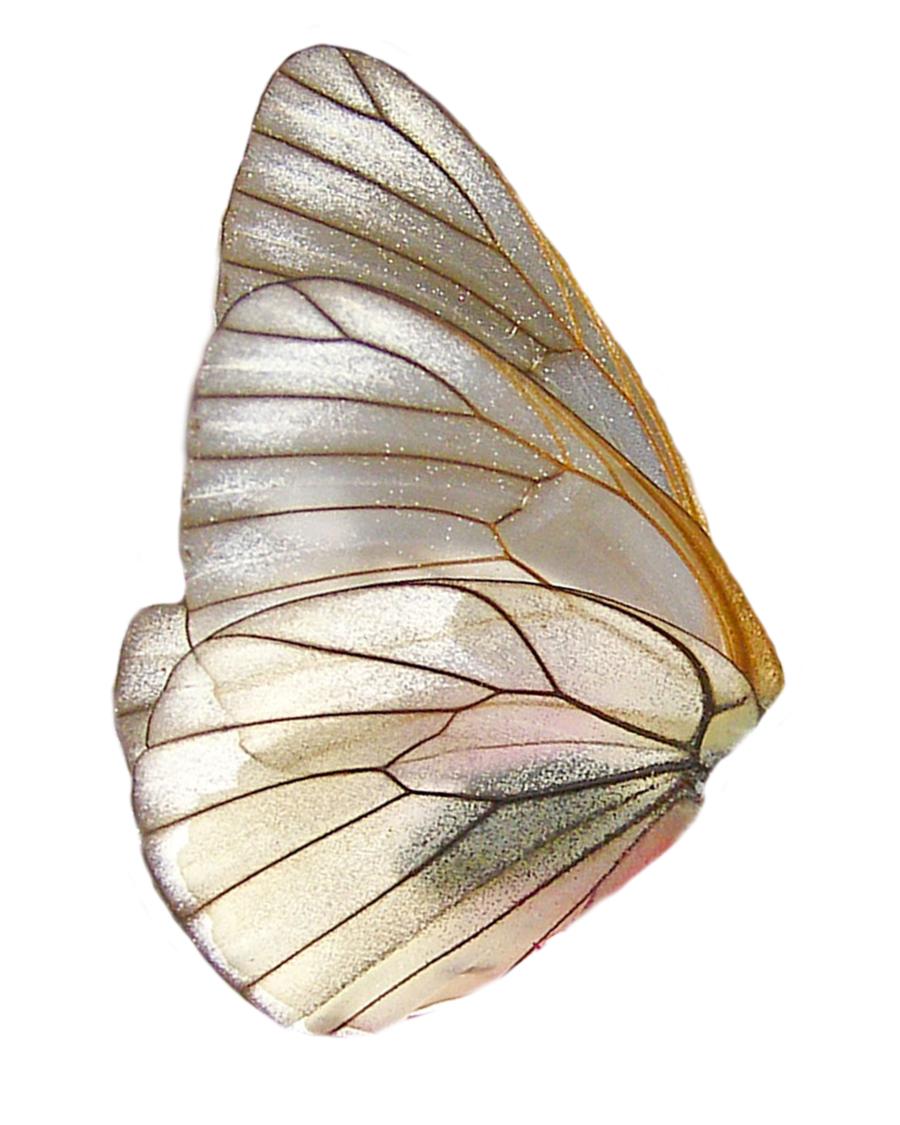 Png Wings By Moonglowlilly On Deviantart Wings Png Butterfly Wings Wings