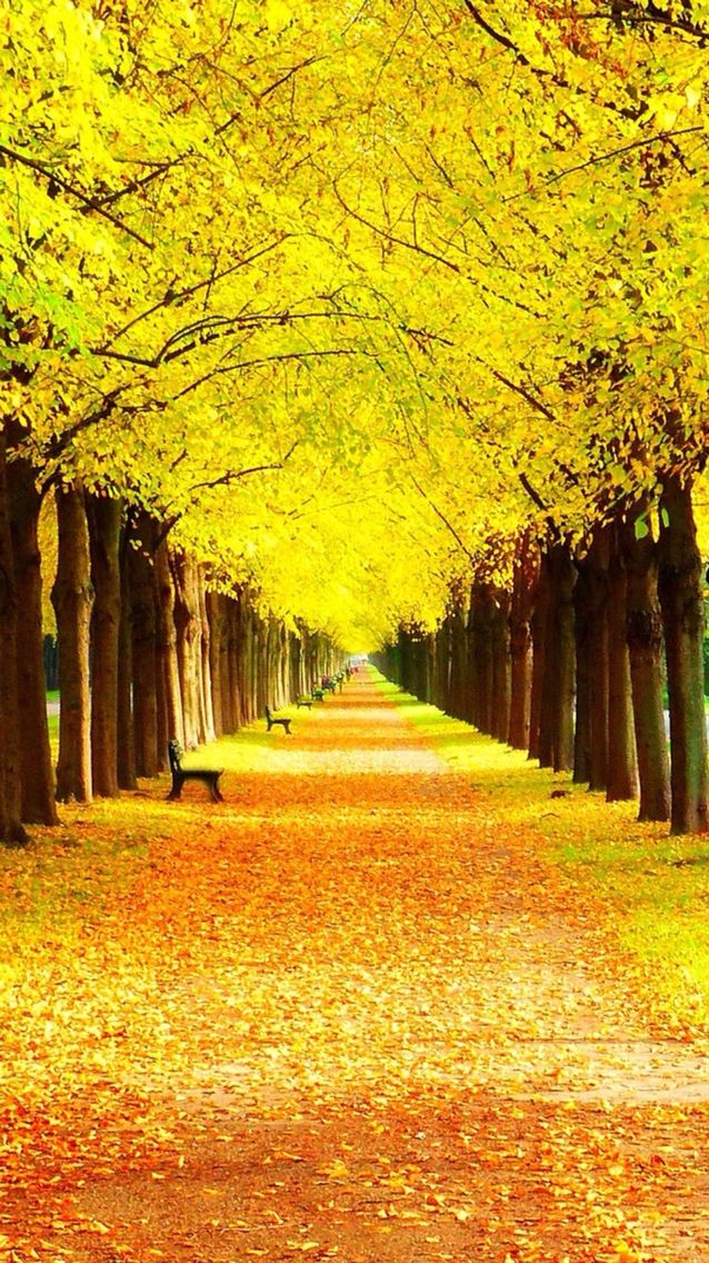 So yellow Don't look real (With images) Autumn scenery