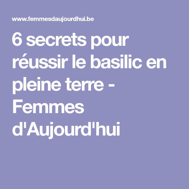 6 secrets pour réussir le basilic en pleine terre ...