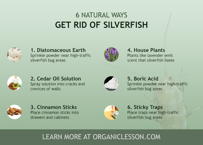 how to get rid of silverfish bugs fish moths naturally stink bug removal get rid of. Black Bedroom Furniture Sets. Home Design Ideas