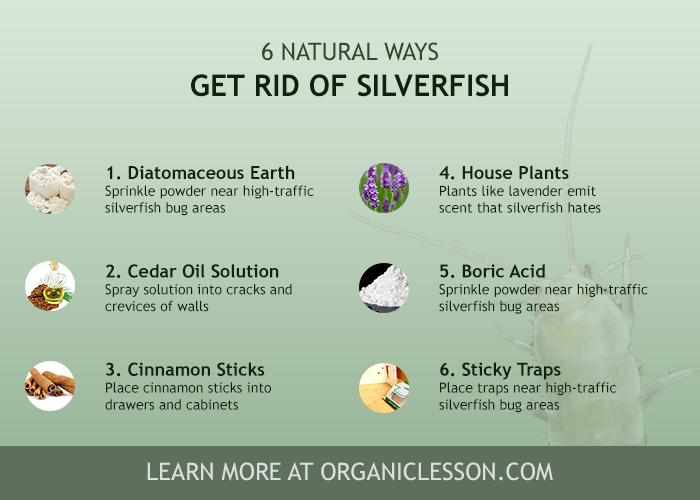 6 Natural Ways To Get Rid Of Silverfish Fish Moths