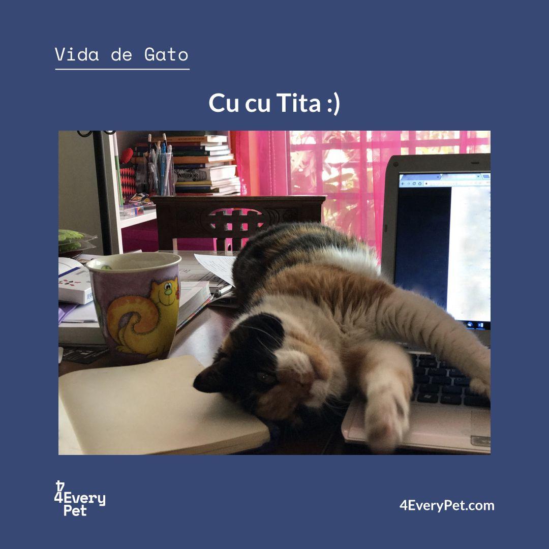 O que um gato tem que fazer para chamar a atenção nesta casa?? :)  #4EveryPet #VidaDeGato #Tita