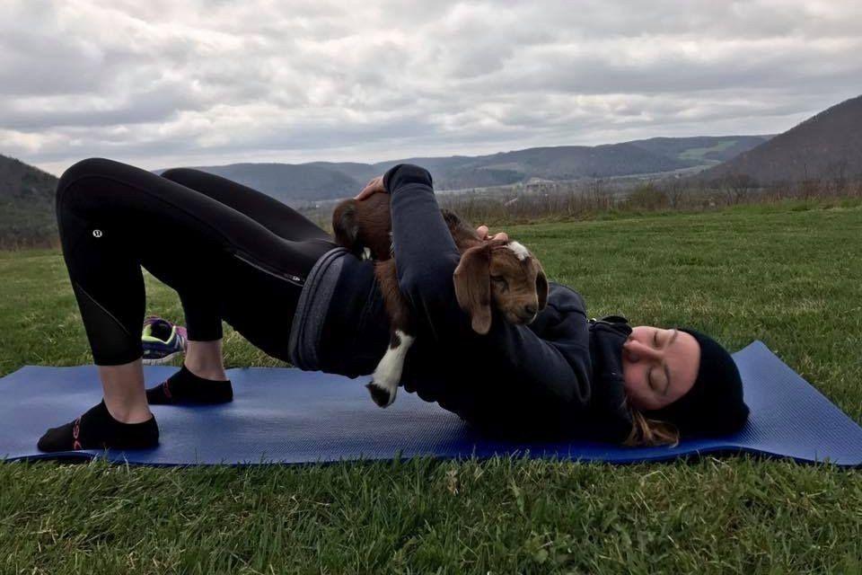 Goat Yoga on the Homestead -  -  http://bit.ly/2rWvUCZ