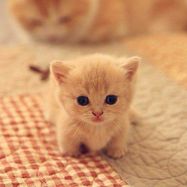 Cuddly and cute Cute baby animals, Cute cats, Kittens cutest