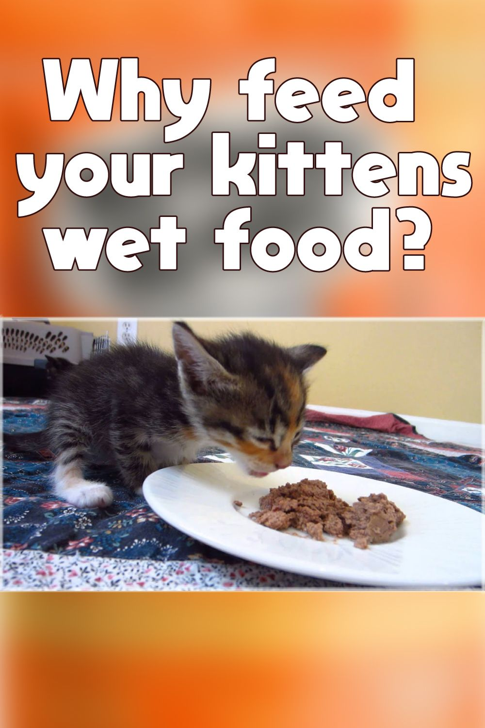 Why Feed Your Kittens Wet Food In 2020 Kitten Food Kitten Food Brands Cat Food Brands