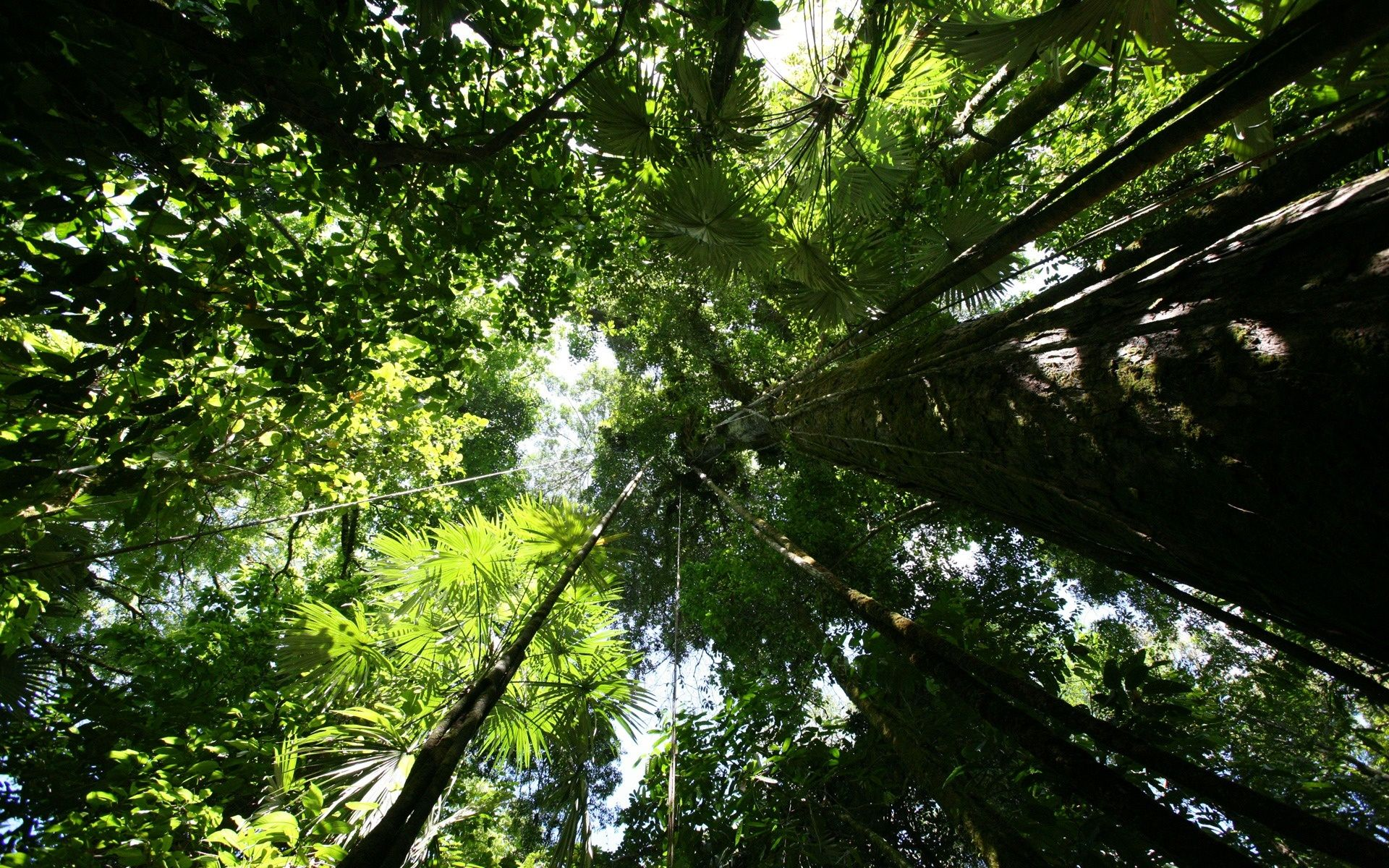 In the rainforest most plant and animal life is not found