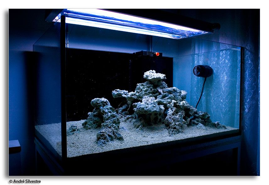 Love this gonna do some rock rearranging todaaaay are for Rocks for fish tank