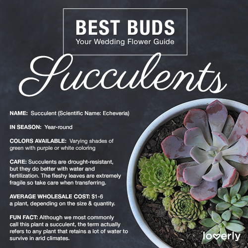 Bouquet Inspiration: Everything you need to know about succulents for your wedding