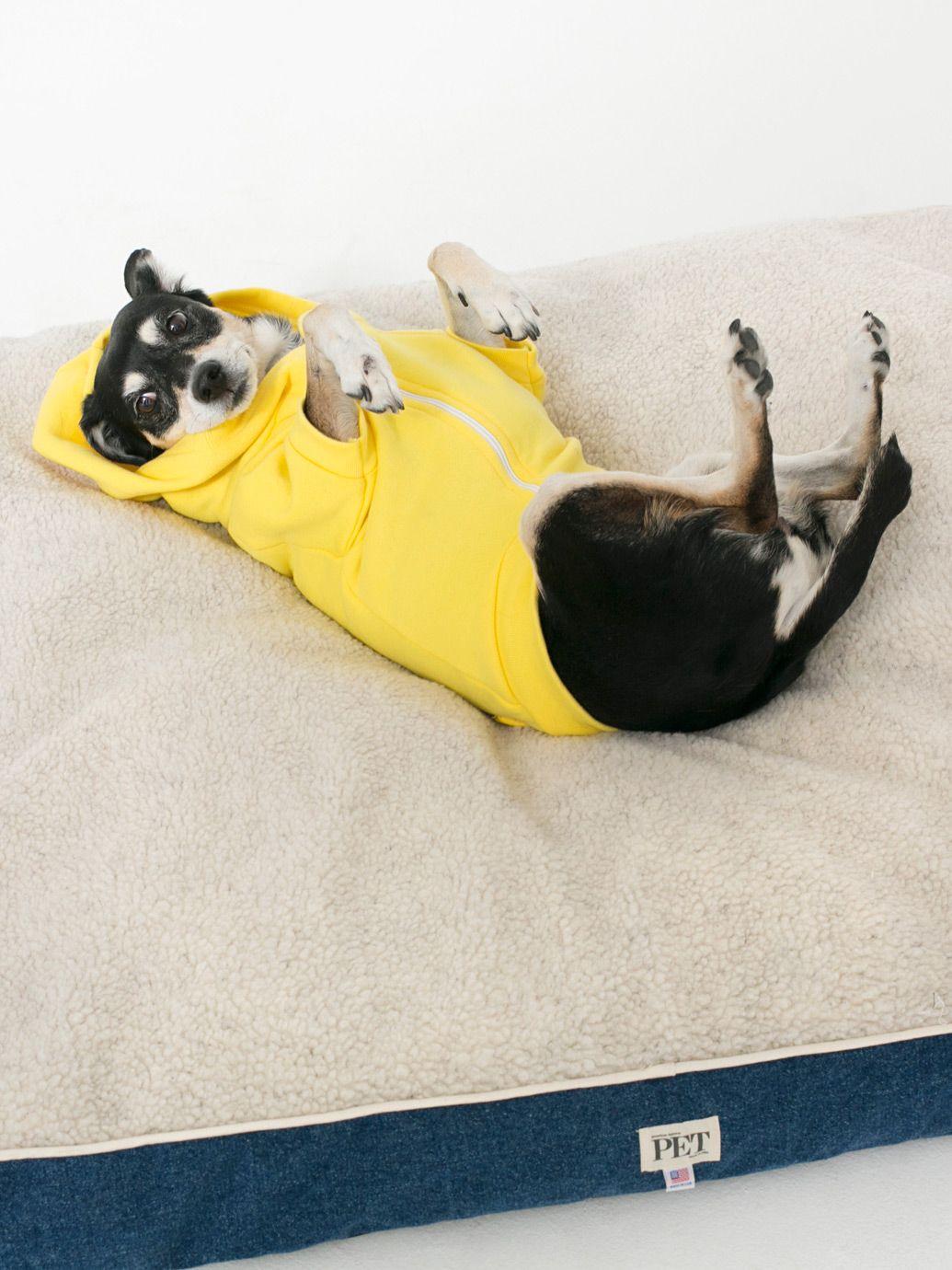Cute dog in yellow hoodie American Apparel Large Denim