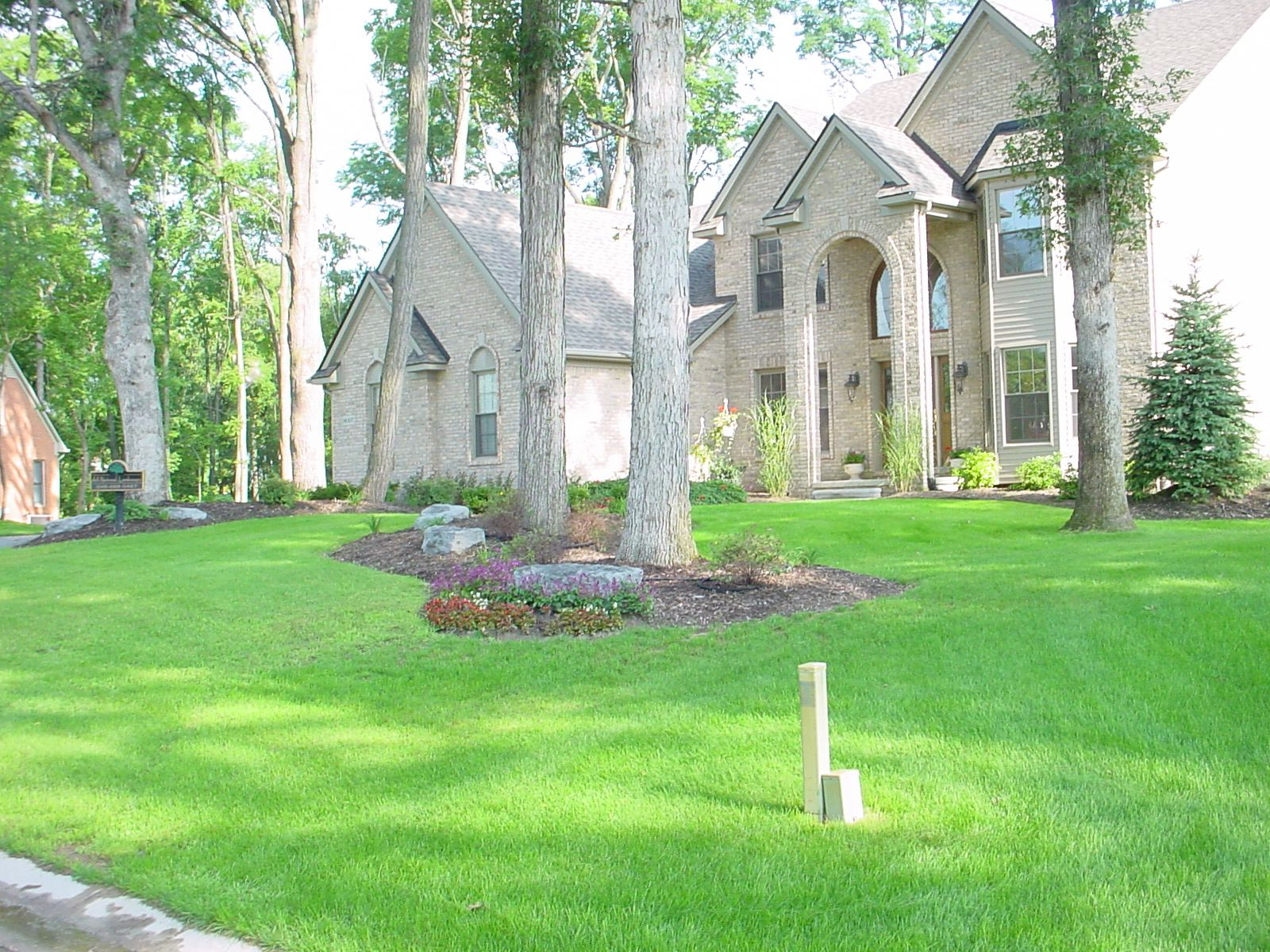 Mature landscaping trees