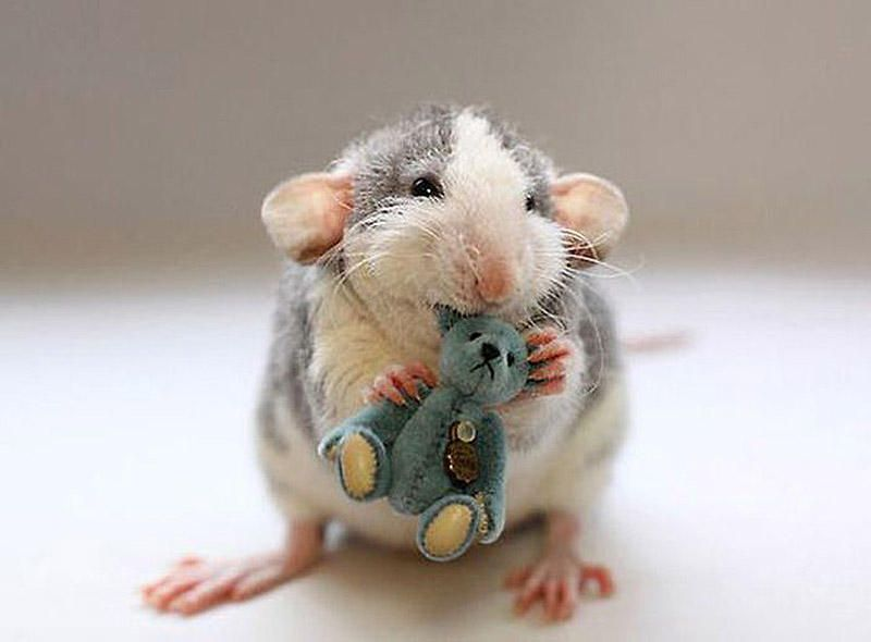 смешные картинки с мышками вам нраву